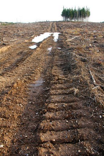 Biomass_tracks.jpg