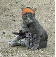 Cat With Gun Pictures | Funny and Cute Cats Gallery
