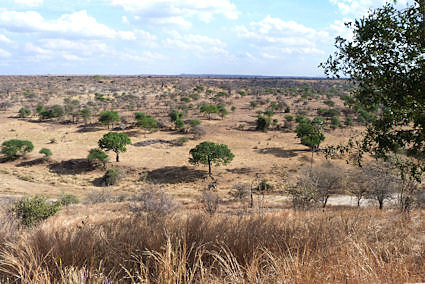 The savanna the way we saw it on our first day.