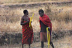 Two traditionally dressed Maasai men, minus the long canes they usually carry.